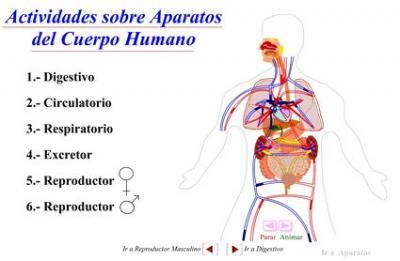 20091117172544-cuerpo-humano-.jpg