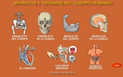 20091117172349-aparatos-y-organosd-el-cuerpo-humano-.jpg
