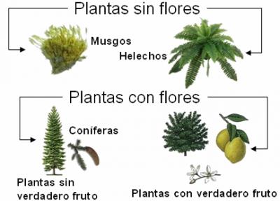 20151215181729-plantas-clases.png