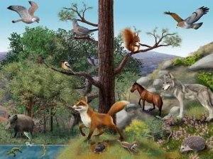 20160205195822-ecosistema-terrestre-800x600-.jpg