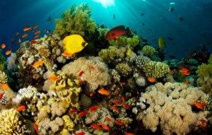 20160209160325-los-14-animales-marinos-en-peligro-de-extincion6-800x600-.jpg
