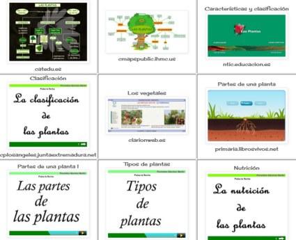 20170212183551-plantas-800x600-.jpg